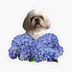 Hydrangea Flower, Flowers, Shih Tzu Dog, Blossom Flower, Stickers, Dogs, Designs, Art, Products