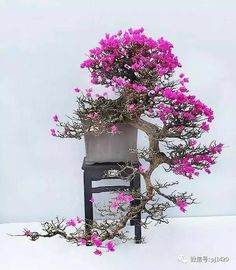 Improving Upon Office Environment Air Excellent With Indoor Crops - Superior For Business Lindo. Bonsai Plants, Bonsai Garden, Garden Wall Designs, Plantas Bonsai, Bonsai Styles, Mini Bonsai, Acer Palmatum, Miniature Plants, Tree Wall Art
