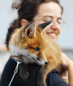 Read on to see what surprising animals from the wild outdoor world are becoming domesticated and adored by pet owners.