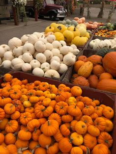 Pumpkins are classic autumn seasonal decor. They're lovely on the front porch, along the front walk, or even in a fall centerpiece. But how long do pumpkins last? Read on to learn all about it! Types Of Pumpkins, Pink Pumpkins, Fall Pumpkins, Harvest Decorations, Seasonal Decor, Planting Pumpkin Seeds, Natural Fall Decor, Pumpkin Varieties, Pumpkin Seed Recipes