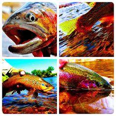 Two Guys ~ Wet Waders & Flies: Two Guys ~ Wet Waders & Flies ... Photo-Art On Display