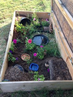 Our ornate box turtle enclosure More