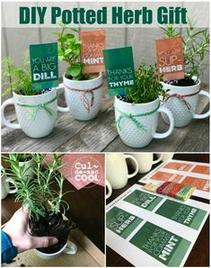 DIY Potted Herb Gift – Perfect for Mother's Day or Teacher Appreciation  