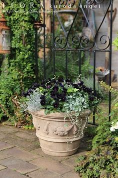 Container Gardening, Gardening Tips, Autumn Garden, Potted Plants, Flower Containers, Flower Arrangements, Flora, Backyard, Ohana