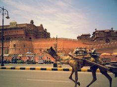 Jaigarh Fort - Take a tour of Junagarh Fort in Bikaner, Rajasthan with beautiful images of interiors and exteriors of the fort. Historical Monuments, Forts, Beautiful Images, Interior And Exterior, India, Travel, Animals, Animales, Viajes
