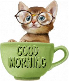 Good Morning - Cat in a Cup Good Morning Wishes Gif, Good Morning Cat, Cute Good Morning Quotes, Good Morning Flowers, Good Morning Friends, Good Morning Messages, Good Morning Greetings, Morning Prayers, Morning Coffee Images