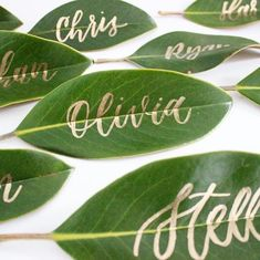 How fitting are these magnolia leaf place cards for a Carrie D Happy Earth Day! How fitting are these magnolia leaf place cards for a Carrie DHappy Earth Day! How fitting are these magnolia leaf place cards for a Carrie D Leaves Name, Table Verte, Wedding Name Cards, Wedding Seating Cards, Wedding Table Names, Magnolia Leaves, Magnolia Garland, Place Names, Wedding Places