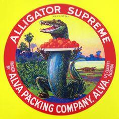 Old Florida, Vintage Florida, Florida Style, Florida Gators, Florida Travel, Vintage Labels, Vintage Ads, Vintage Packaging, Vintage Signs