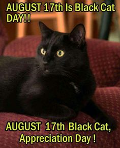 Black Cat Day. August 17, 2015.