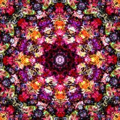 Autumn Mandalas 2015 (Photographic Mandalas from Nature) photo collection by Journey Art by Danielle Wilkinson