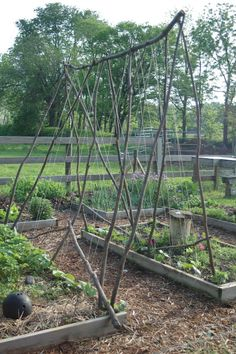Whether your garden area is a large backyard or a small apartment patio, you can grow a garden! Here are some of our favorite vegetable garden ideas for raised garden beds and DIY garden trellis plans. Pea Trellis, Garden Trellis, Home Vegetable Garden, Raised Garden Beds, Raised Beds, Gardening, Edible Garden, Growing Vegetables, Growing Plants