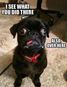 The 50 Best Funny Animal Pictures - Funny Animals