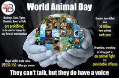Animals have been in this planet way before any sign of human existence, so it's our outright duty to protect them as they are equal inhabitants of Earth. Trendybharat celebrates #WorldAnimalDay and hopes the world to be a better place for the furry creatures. #worldanimalday #animalsday