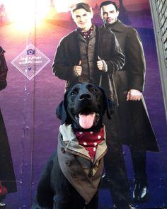 Dimitri and Dogmitri. . . . @anastasiabway #bear #stagedog #anastasia #stagedoor #derekklena #raminkarimloo #nyc
