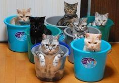Cat box box