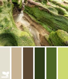 Color: Moss Tones by Design Seeds - light beige, medium beige, brown, moss green, medium green, melon green.
