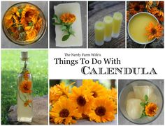 Things to Do With Calendula: FREE eBook! Filled with wonderful and simple-to-make recipes including: Calendula infused lip balm, soap, face  body cream, vinegar, tincture, oil, witch hazel, tea, ice, and salve. Plus, information on using Calendula on pets, how to properly dry the fresh flowers, and lots more.