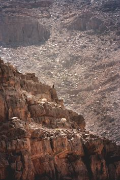 Mountain Goat, Wadi Shah, Ras Al Khaimah