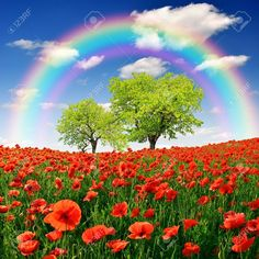 Picture of rainbow above the spring landscape with red poppy stock photo, images and stock photography. Spring Pictures, Nature Pictures, Rainbow Photography, Nature Photography, Beautiful Flowers Wallpapers, Beautiful Images, Spring Scenery, Background Clipart, Spring Landscape