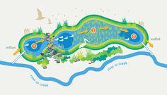 Wetland process diagram