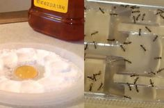 Never See Another Flea, Roach, Ant, Or Pest Again – Cheap And Easy 1 Ingredient Solution – DIY ONLY