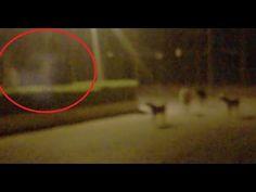 Ver video fantasma y perros