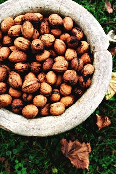 Research has shown that walnuts promote breast health. Pagan Art, Hedge Witch, Herbal Magic, Kitchen Witch, Natural Beauty Tips, Healing Herbs, Medicinal Plants, Book Of Shadows, Wellness Tips