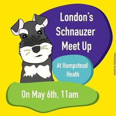 @marmiteschnauzer & @ovi_theschnauzer have organised a #schnauzer meetup in London. If anyone is interested in coming along check out their instagram pages. #dogwalk #schnauzermeetup #ukschnauzers #schnauzersuk