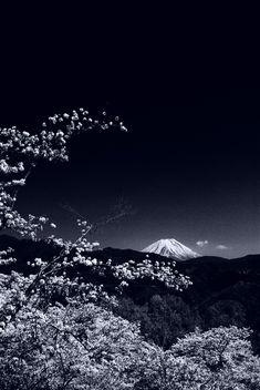 浮世の富士。の画像(写真)