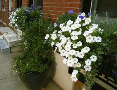 Window Boxes and Front Container | Flickr - Photo Sharing!