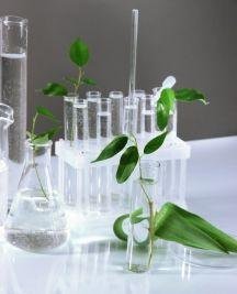 Plant Based PG Propylene Glycol: It's About Time!!!
