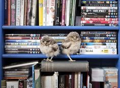 Well, I have two owls on a bookshelf. So you're wrong.