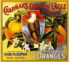 Covina Chapman's Golden Eagle Orange Citrus Fruit Crate Label Vintage Art Print