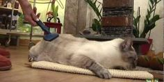 Een gezonde huiskat heeft toch verzorging nodig. Vooral zijn vacht is belangrijk. De kat zal zichzelf schoonmaken door te likken. Borstel de kat tijdens spelen.