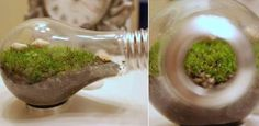 Light bulb terrariums - the industrial aesthetic meets nature!