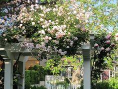 kletterrose rosa pergola holz garten verschönern
