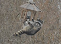Beyond birds and butterflies, this garden welcomes all critters — even raccoons