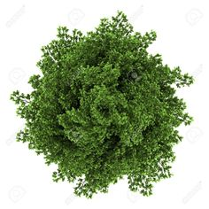 plants top view white background - Google Search