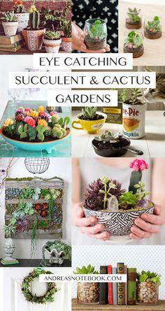 Eye catching DIY succulent and cactus gardens!