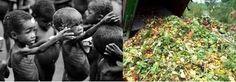 NATURA - MEDIO AMBIENTAL ©: ¿Qué cantidad de alimentos y por qué se desperdician cada año?