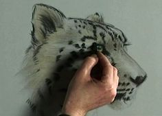 Wildlife in Pastel Part 1 with Vic Bearcroft | ArtistsNetwork.TV Learn easy pastel drawing techniques for capturing the life-like qualities of wild animals. Vic demonstrates how to get the correct proportions and shapes of wolves and tigers using pastels on velour to indicate details such as the texture of their fur, the shapes of their spots, stripes, and more.
