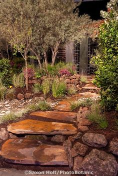 "Stepping stone path through ""No Water for this Garden"""