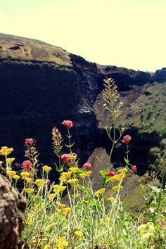 petites fleurs sur Volcan! :)