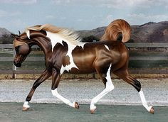 breyer horses jumping | Custom Breyer Horses Customized from the breyer