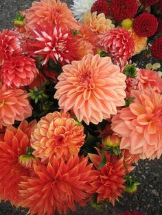 dahlias by big T, via Flickr