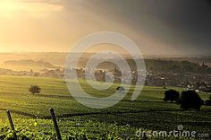 View of the vineyards and village of Ergersheim (Alsace, France)