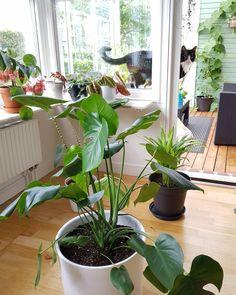Green Plants, Diy, House Plants, Basil, Gardening, Home Decor, Instagram, Plants, Decoration Home