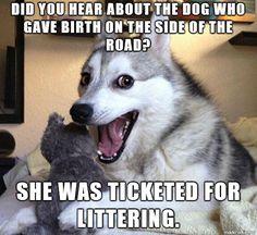 Pun Dog is Punny!