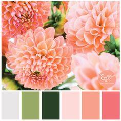 Peach Flowers - Color Palette