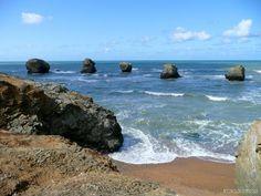 Les cinq pineaux Sion sur l'Océan en Vendée